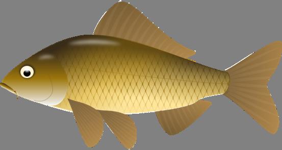 u30b3 u30a4 uff5c u5ddd u3084 u6c60 u306e u9b5a uff5c u30a4 u30e9 u30b9 u30c8 u9b5a u56f3 u9451 koi fish pond clipart free koi fish clipart
